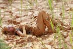 mp0008_hot_muddy_armygirl_004_small